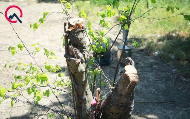 Xətaidə ağac kəsənlərə cinayət işi açıldı
