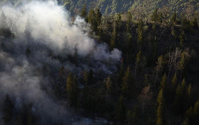 Gürcüstanda meşə yanğını, 150 yanğınsöndürən cəlb olundu
