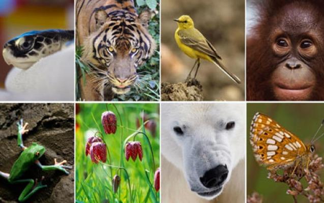 22 may – Beynəlxalq Biomüxtəliflik Günüdür