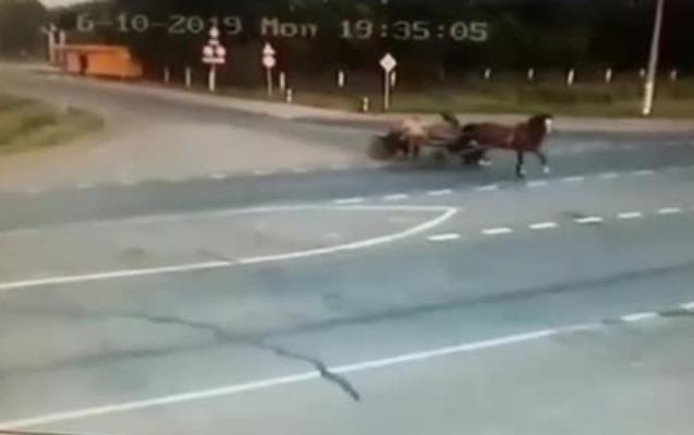 Rusiyada avtomobil at arabasına çırpıldı, 2 nəfər öldü