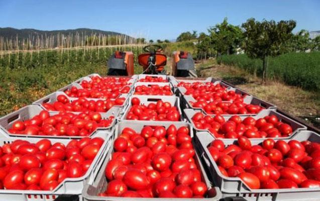 40 tona yaxın pomidorun geri qaytarılması ilə bağlı