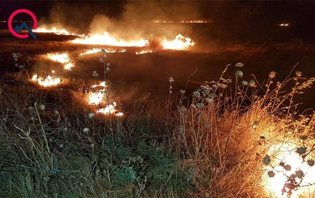 Şamaxıda taxıl zəmiləri yandı