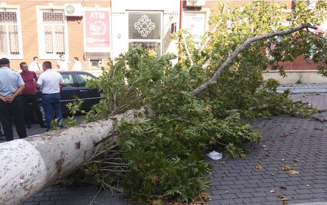 Külək ağacları maşınların üzərinə aşırdı