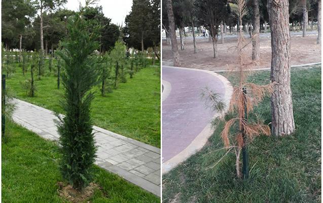 3 ay əvvəl açılışı olan parkın hazırkı vəziyyəti