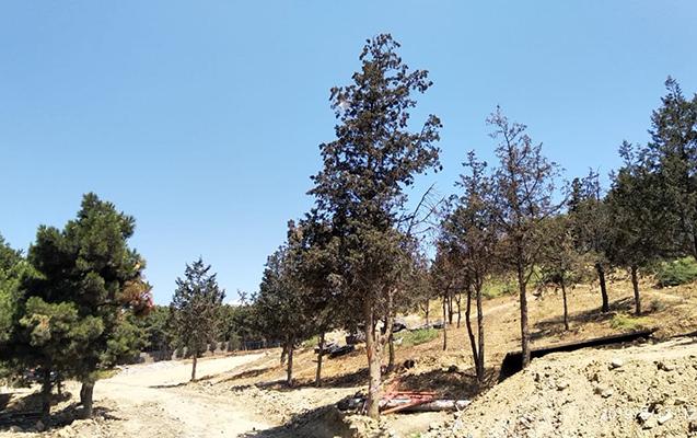 Xətaidə hasarlanmış ərazidəki ağaclarla bağlı məcburi göstəriş verildi