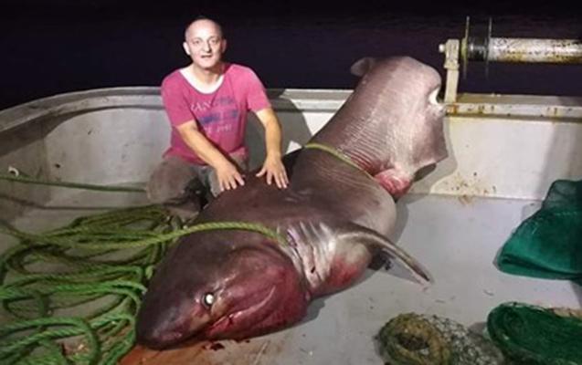 Türkiyədə balıqçılar 5 metrlik köpəkbalığı tutdu