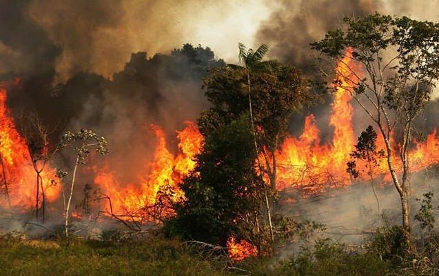 Amazondakı yanğın siyasi gərginlik yaratdı
