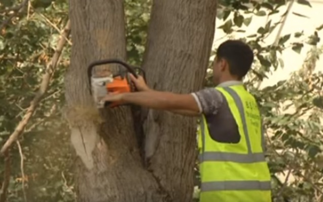 Bakıda 5000 ağac kəsiləcək - Video
