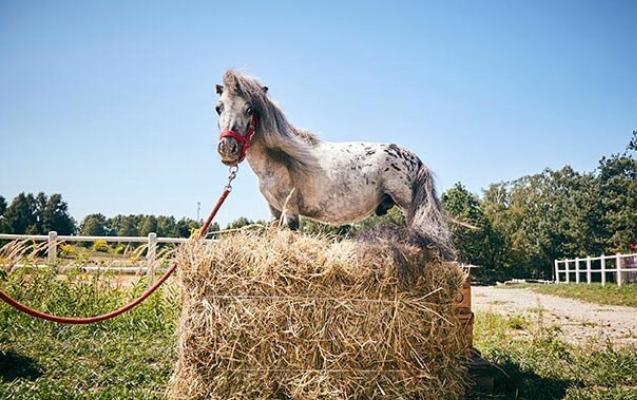 Dünyanın ən balaca atı tapıldı