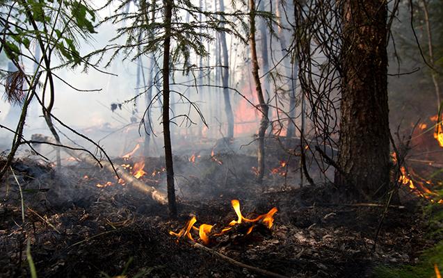 Çernobıl yaxınlığında meşə yandı