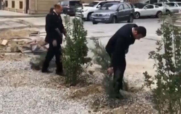 Dövlət Agentliyinin işçiləri ağacları niyə çıxarıb?