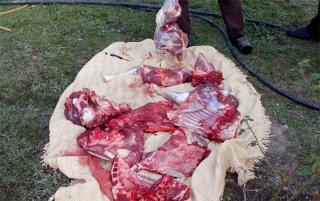 64 kilo at əti aşkarlandı