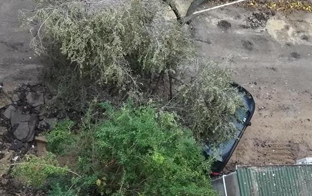 Bakını gözləyən BÖYÜK TƏHLÜKƏ: 5 milyon ağacın 80 faizi... - RƏSMİ