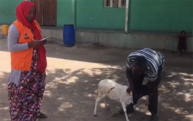 Xuraman 4-cü uşağı üçün Afrikada qurban kəsdirdi - Video