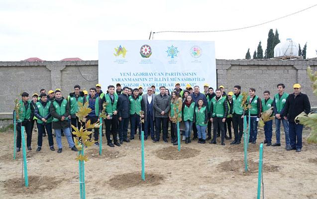 Mərdəkanda 1000 ədəd Çinar ağacı əkildi