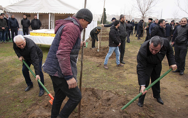 Nərimanov rayonunda 2500-dək ağac əkilib