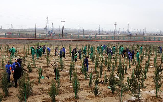 """""""Təmiz Şəhər""""in ərazisində 2000 ağac əkildi"""