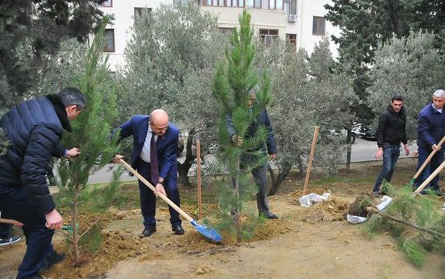Nəsimi rayonunda da ağacəkmə aksiyası keçirildi