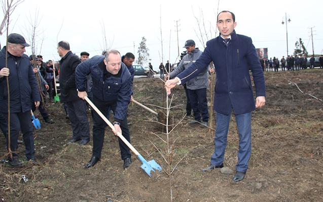 Cəlilabadda 2500 adam ağac əkdi