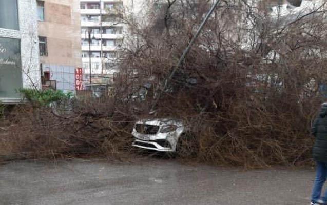 Bakıda külək ağacı maşınların üzərinə aşırdı
