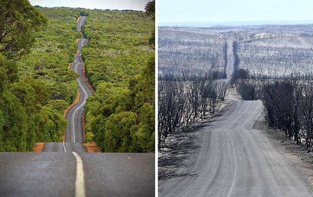 Avstraliya yanğından əvvəl və sonra