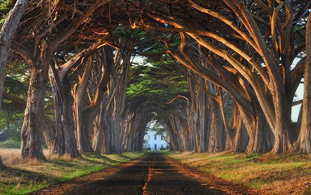Dünyanın qeyri-adi ağacları