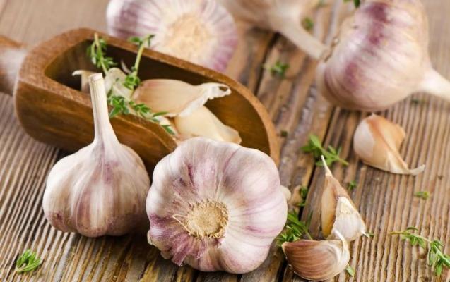 Hər gün sarımsaq yeməyin faydaları açıqlandı