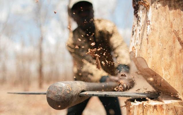 Lerik meşəsində ağacların kəsilməsi faktı araşdırılır