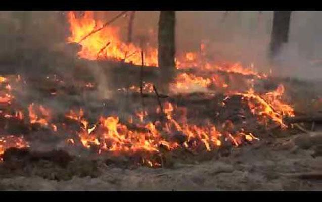 Çernobılda meşə yanğını 3 gündür davam edir