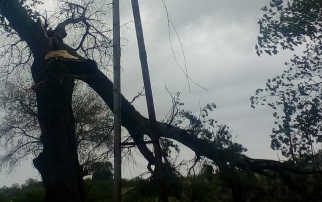 Güclü külək ağacları elektrik xətlərinin üzərinə aşırdı