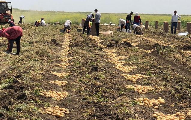 Heydər Əliyev Fondu fermerlərin məhsulunun 100-dən çox yük maşını ilə ixracında yardım etdi