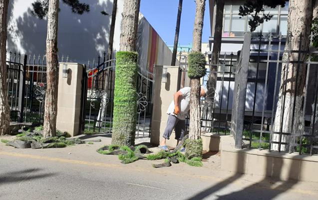 Stadion qarşısındakı ağacları süni örtüklə bəzədilər