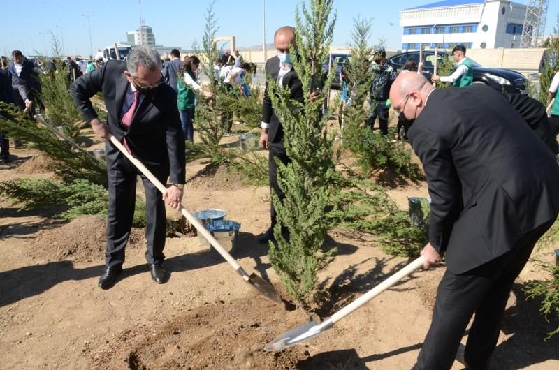 Bakıda Anım Gününə həsr edilən ağacəkmə aksiyası keçirildi - Fotolar