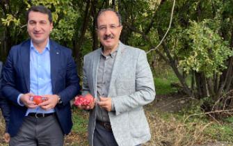 Hikmət Hacıyev səfirlə nar yığdı