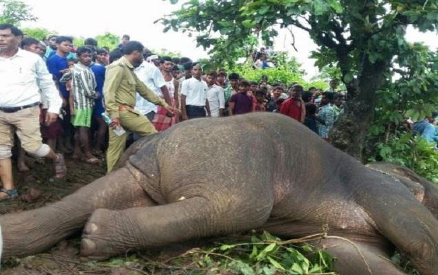 14 nəfərin ölümünə səbəb olan fil güllələnib
