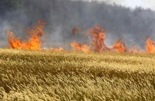 Kürdəmirdə 5 hektar biçilməmiş taxıl sahəsi yanıb
